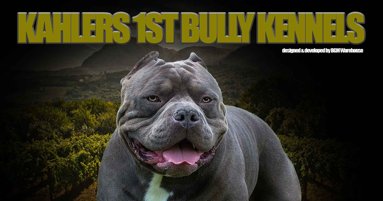 Our Females – Kahlers 1st Bully Kennels